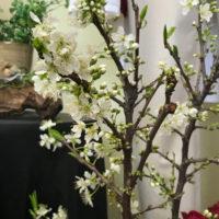 店に飾ってある枝物のお花が咲きました。